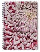 Introverted Spiral Notebook