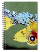 Io Moth Automeris Io Adult Males Spiral Notebook