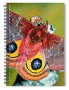Io Moth Spiral Notebook
