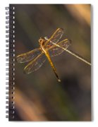 Iridescent Dragonfly Wings Spiral Notebook