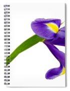 Iris   Spiral Notebook