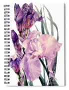 Watercolor Of An Elegant Tall Bearded Iris In Pink And Purple I Call Iris Joan Sutherland Spiral Notebook
