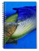 Iris On Blue Spiral Notebook