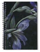 Iris Rain Spiral Notebook