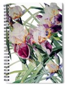Watercolor Of Tall Bearded Irises I Call Iris Vivaldi Spring Spiral Notebook