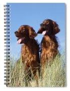 Irish Red Setter Dog Spiral Notebook