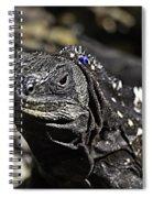 Island Lizards One Spiral Notebook