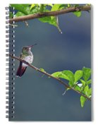 It's A Big World Out There... Spiral Notebook