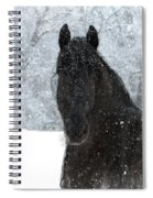 It's Friesian Out Here Spiral Notebook