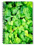 Ivy Spiral Notebook