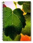Ivy Light Spiral Notebook