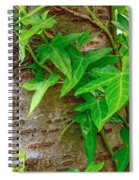 Ivy Wrapped Tree Trunk Spiral Notebook