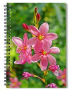 Ixia Flower Spiral Notebook