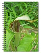 Jack In The Pulpit - Arisaema Triphyllum Spiral Notebook