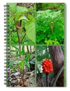 Jack-in-the-pulpit Wildflower    Arisaema Triphyllum Spiral Notebook