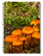 Jack Olantern Mushrooms 22 Spiral Notebook
