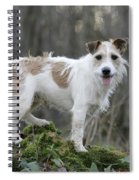 Jack Russell Dog In Autumn Setting Spiral Notebook