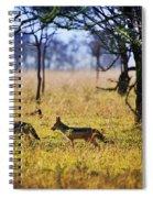 Jackals On Savanna. Safari In Serengeti. Tanzania. Africa Spiral Notebook
