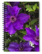 Jackmanii Purple Clematis Vine Spiral Notebook