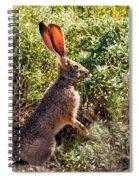 Jackrabbit Spiral Notebook