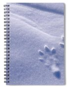 Jackrabbit Tracks In Snow Spiral Notebook