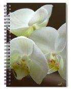 Jack's Orchids Spiral Notebook