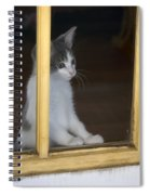 Jackson The Inquisitive Kitty Spiral Notebook