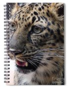 Jaguar-09499 Spiral Notebook