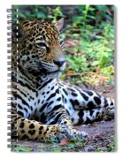 Jaguar Resting From Play Spiral Notebook