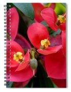 Jamaican Poinsettia Spiral Notebook