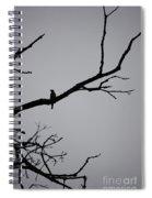 Jammer Bird Silhouette 1 Spiral Notebook