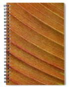 Jammer Blinds 002 Spiral Notebook