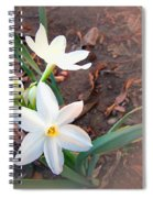January 2014 Paper-whites In Bloom Spiral Notebook
