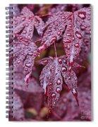 Japanese Acer Palmatum Atropurpurea Shrub Spiral Notebook