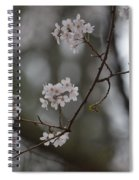 Japanese Cherry Blossoms Spiral Notebook