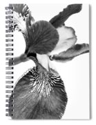 Japanese Iris Flower Monochrome Spiral Notebook
