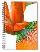 Japanese Iris Orange White Five Spiral Notebook