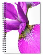 Japanese Iris Violet White Two Spiral Notebook