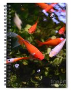 Japanese Koi Fish Spiral Notebook