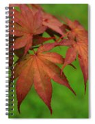 Japanese Maple Autumn Colors Spiral Notebook