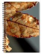 Japanese Maple Leaf Brown - 2 Spiral Notebook