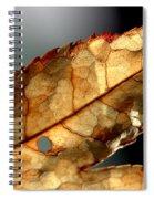 Japanese Maple Leaf Brown - 4 Spiral Notebook