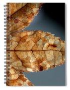 Japanese Maple Leaf Brown - 1 Spiral Notebook