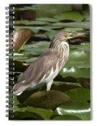 Javan Pond Heron Dthn0071 Spiral Notebook