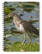 Javan Pond Heron With A Fish Dthn0069 Spiral Notebook