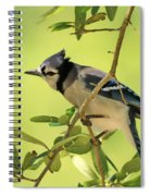 Jay In Nature Spiral Notebook