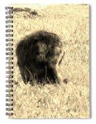 Jean Lafitte's Headless Graveyard Cat Spiral Notebook