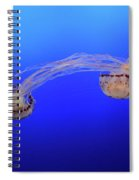 Jellyfish 7 Spiral Notebook