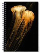 Jellyfish On Black Spiral Notebook