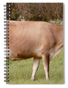 Jersey Cow In Pasture Spiral Notebook
